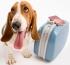 5 tipů pro pohodové cestování se psem