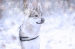 Péče o psí tlapky v zimě