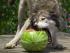Tři nejžhavější trendy ve výživě psů