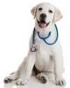 Veterinární diety pro psy = krmivo, které léčí