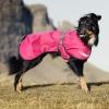 5 nejlepších oblečků pro psa