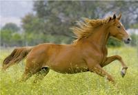 Jak vybrat: Kloubní výživa pro koně