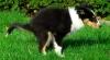 Jak zastavit průjem u psa