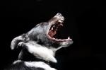 Čištění zubů u psů i koček - jednoduše a hravě