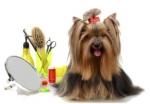 Kosmetika pro psa a nezbytné vychytávky