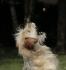 Co dělat když pes nechce žrát