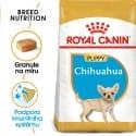 Royal Canin Chihuahua Puppy granule pro štěně čivavy 500g