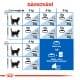 Royal canin Feline Indoor 4kg
