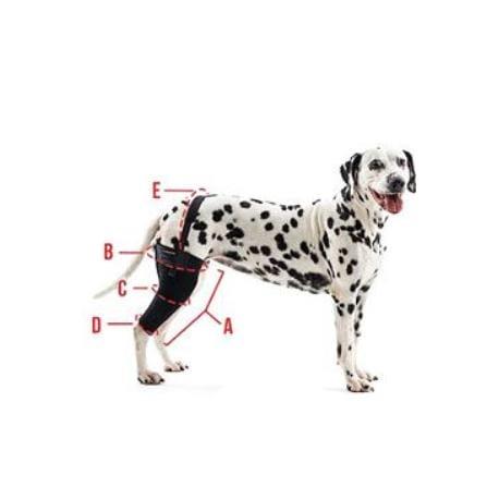 Bandáž Rehab na koleno pro psa KRUUSE XS Levá