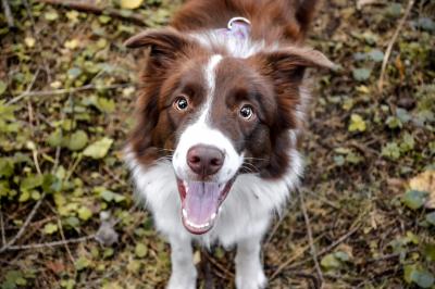 Fitmin Dog for Life: nové příchutě