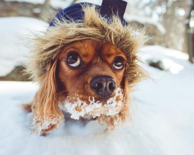 Kdy si psi zaslouží oblékat aneb když už srst nestačí