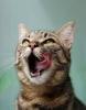 Brit Care Cat Snacks - desítka nových příchutí