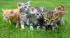 Máme kotě: jak o něj pečovat?