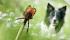 Effipro DUO: účinné pipety proti blechám a klíšťatům