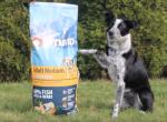 Testování granulí Ontario: zdravé krmení pro psy i kočky