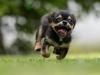 Jak na psí mlsouny?