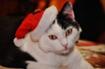 Tipy na originální vánoční dárky pro vaši kočičku