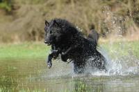 Zdravý pohyb se psem