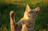 Jak vybrat škrabadlo pro kočku?