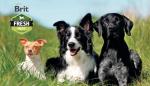 Kulinářský zážitek do všech psích misek