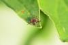 Nejčastější vnější parazité: klíšťata a blechy