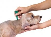 Antiparazitika pro štěňata