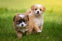 Kupujeme štěně: jak se připravit na jeho příchod?
