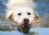 Se psem u vody