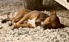 Pes v létě: přehřátí a co dělat