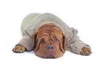 4 praktické rady jak vybrat obleček pro psa