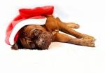 5 tipů pro klidné Vánoce s mazlíčkem