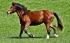 Chondroprotektiva pro koně
