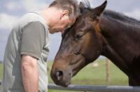 Top 3 kloubní výživy pro koně