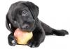 Krmivo a vitamíny pro psy
