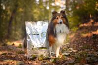 Poloměkké granule Platinum: jak psům chutnají?