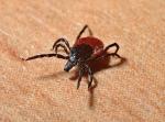 Stop parazitům: velký průvodce antiparazitiky
