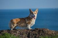V létě na dovolenou se psem