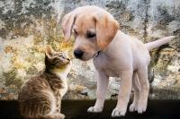Nové trendy ve výživě psů a koček