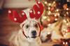 Jak si s mazlíčkem užít klidné Vánoce i silvestra?