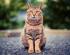 Jak vybrat stelivo pro kočku?