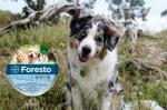 Recenze: celosezónní testování obojku Foresto