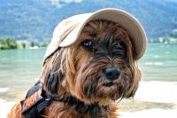 Letní dovolená se psem