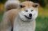 13 filmů o psech, které musíte vidět