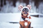Oblečky pro psy: jak správně vybrat?
