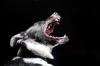 Čištění zubů u psů i koček – jednoduše a hravě