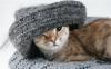 Brit Premium Cat: nové kočičí kapsičky
