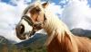 Novinky v kloubních výživách pro koně