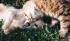 Přírodní antiparazitní přípravky pro psy a kočky