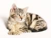 Jak vybrat krmivo pro kočku