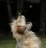 Co dělat, když pes nechce žrát